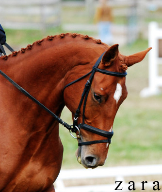 Eventing with Tracey Bienemann